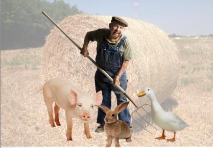 Tanti cialtroni a sparlare di agricoltura su internet, ma pochi nei campi a produrre cibo